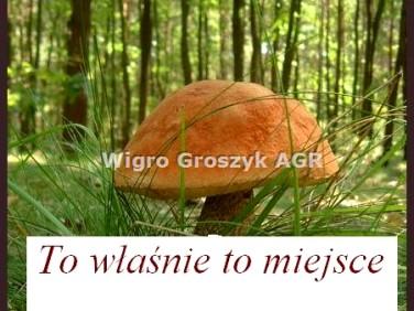 Działka leśna Stanisławów