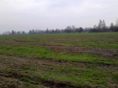 Działka rolna Rogoźno