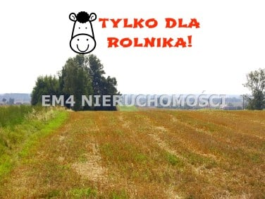 Działka rolna Radule