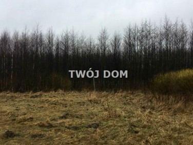 Działka leśna Pieniężno