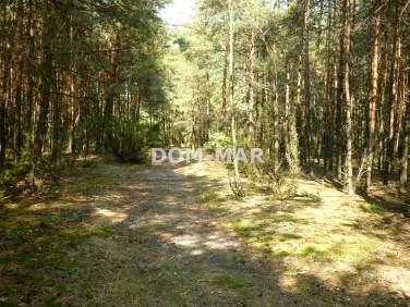 Działka leśna Rokitnica