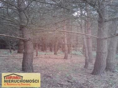 Działka leśna Suchań