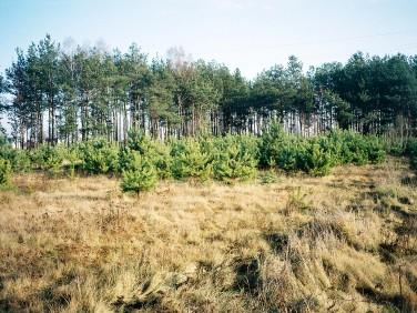 Działka budowlano-rolna Gabryelin