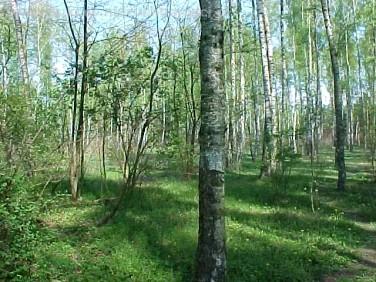 Działka rekreacyjna Sokolniki-Las