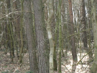 Działka budowlana Podkowa Leśna