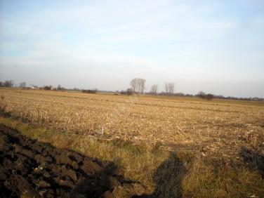 Działka rolna Osiny