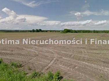 Działka budowlana Nieborowice