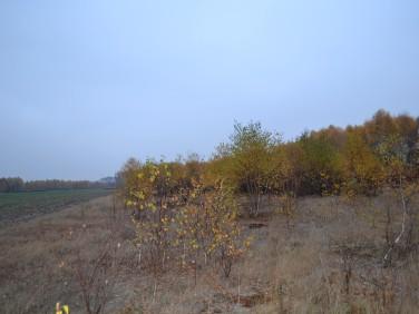 Działka rolna Stachlew