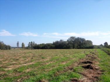Działka rolna Odargowo