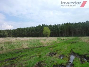 Działka rolna Wołczkowo