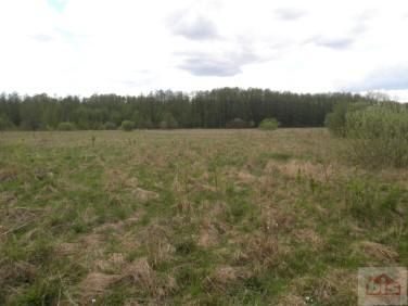 Działka rolna Białowieża