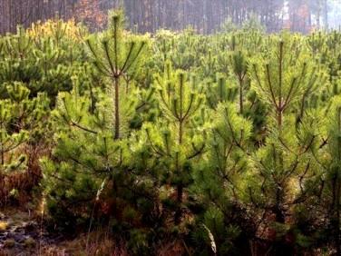 Działka leśna Stare Prażuchy