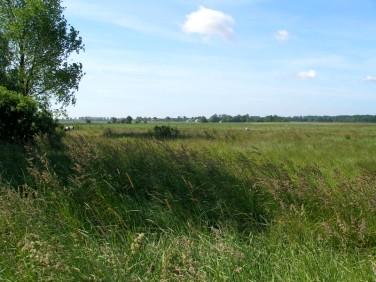 Działka rolna Sarbinowo