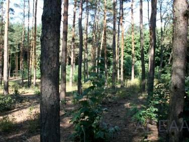 Działka leśna Wołomin