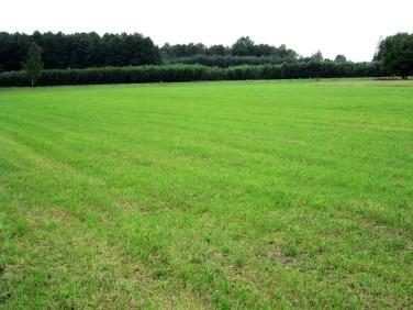 Działka budowlano-rolna sprzedam