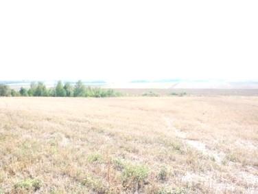 Działka siedliskowa Krępa