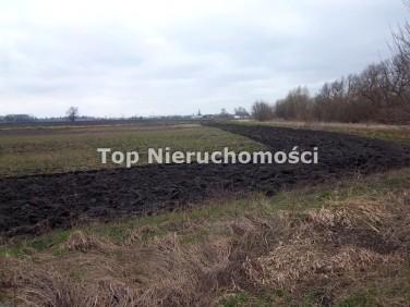 Działka rolna Pogroszew-Kolonia