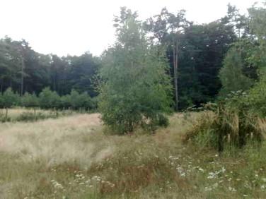 Działka rolna Brzózki