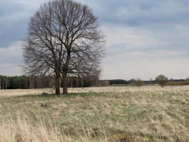 Działka rolna Lubczyna