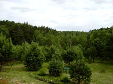 Działka budowlana Leśniewo