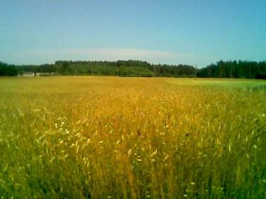 Działka rolna Domatówko