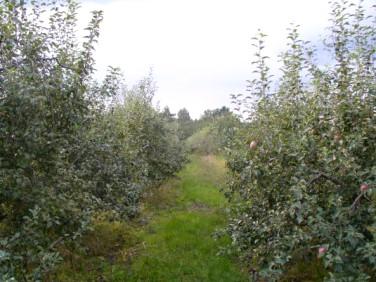 Działka rolna Marianów