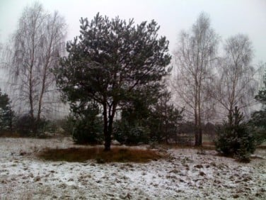 Działka Drzewociny