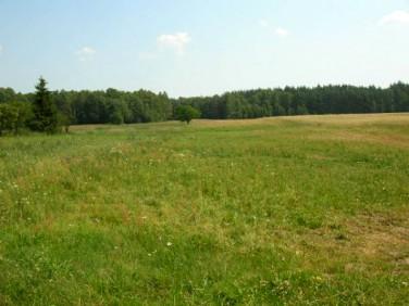 Działka rolna Wilczany