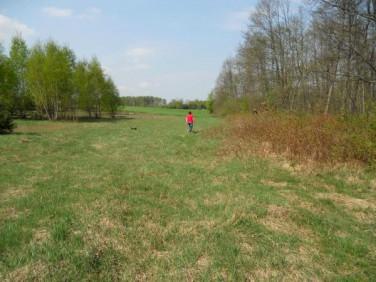 Działka rolna Teodorowo
