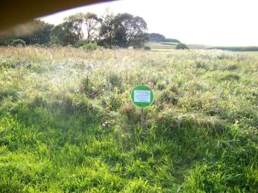 Działka rolna Sarnowo