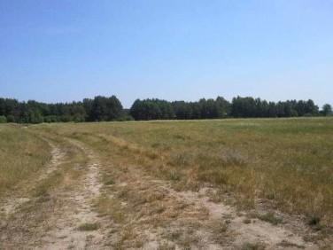 Działka siedliskowa Lubczyna