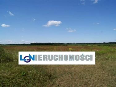 Działka budowlana Lenartowice