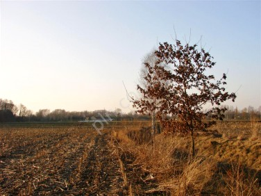 Działka rolna Milanówek