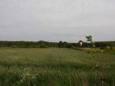 Działka rolna Niemierze