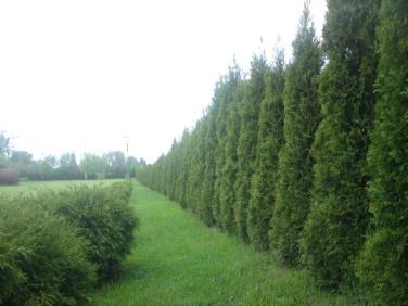 Działka rolna Ostaszewo