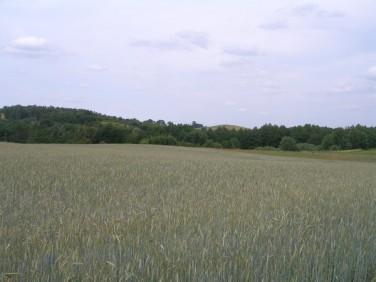 Działka rolna Marianowo