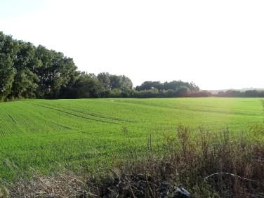 Działka rolna Skulsk
