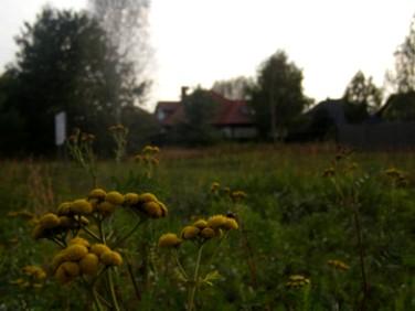 Działka Sadowa
