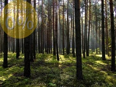 Działka leśna Żuromin