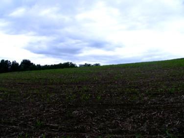 Działka rolna Gdów