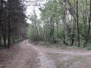 Działka leśna Maliszewo