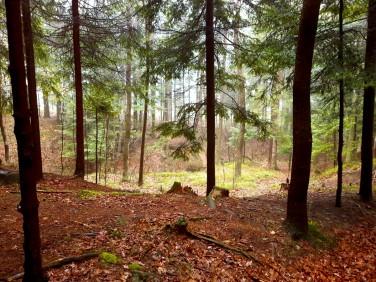 Działka leśna Jeleśnia