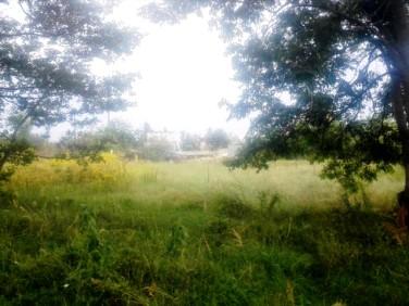 Działka budowlano-rolna Wojkowice Kościelne