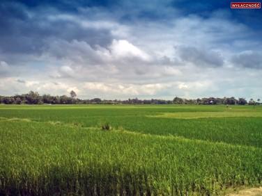 Działka rolna Bukowo