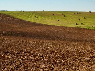 Działka rolna Gołdap