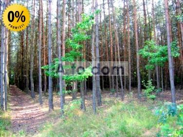 Działka leśna Helenów