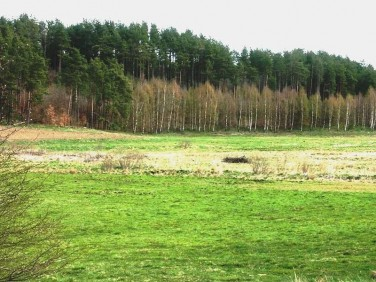 Działka siedliskowa Bojano
