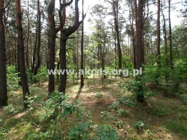 Działka leśna Jeziórko