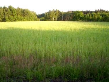 Działka rolna Ściechów