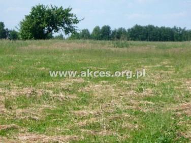 Działka rolna Ludwików